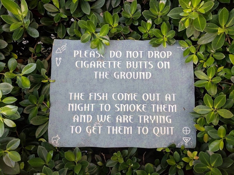 Text - PLEAS DO NOT DROP V CIGARETTE BUTTS ON THE GROUND THE FISH COME OUT AT NIGHT TO SMOKE THEM AND WE ARE TRVING TO GET THEM TO QUIT