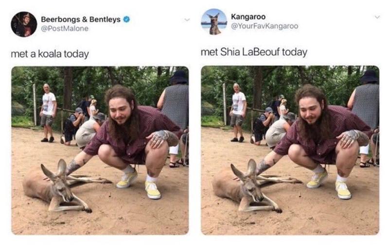 Adaptation - Kangaroo Beerbongs & Bentleys @PostMalone @YourFavKangaroo met Shia LaBeouf today met a koala today