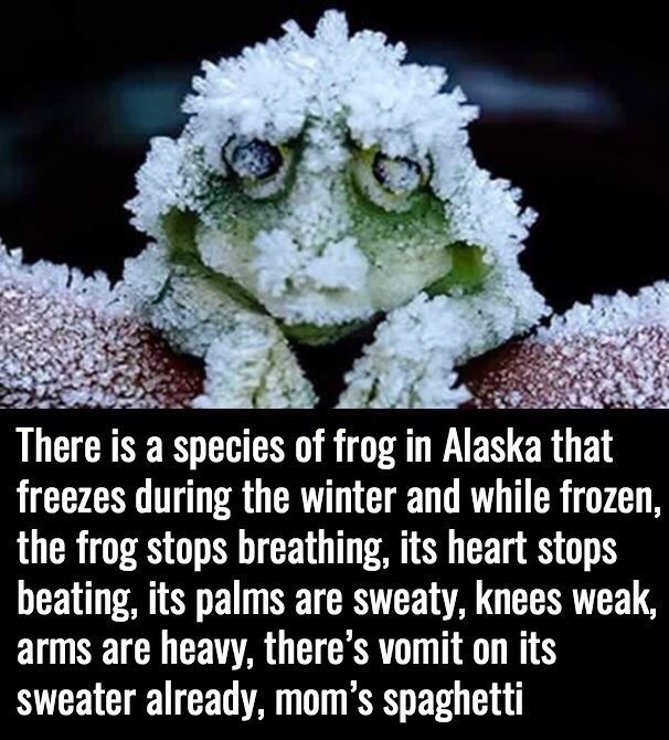 Adaptation - There is a species of frog in Alaska that freezes during the winter and while frozen, the frog stops breathing, its heart stops beating, its palms are sweaty, knees weak, arms are heavy, there's vomit on its sweater already, mom's spaghetti