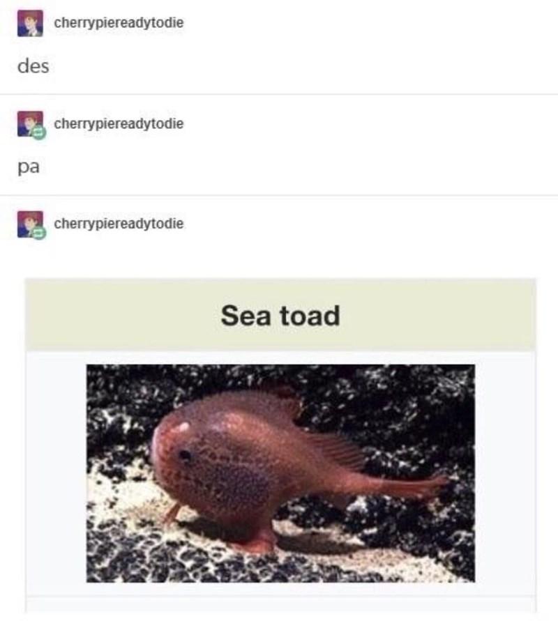 Adaptation - cherrypiereadytodie des cherrypiereadytodie pa cherrypiereadytodie Sea toad