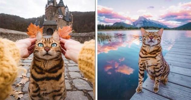 suki cat adventure instagram