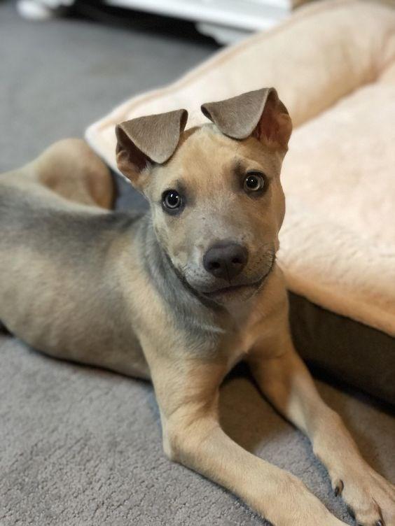 floppy ear dog