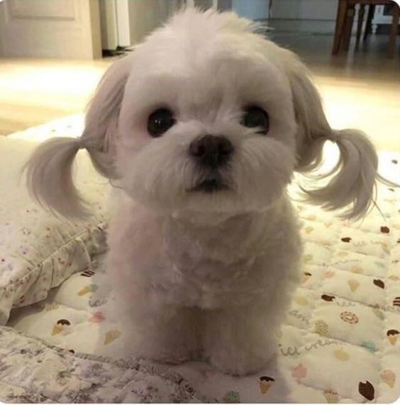 cute dog with cute fluff ears