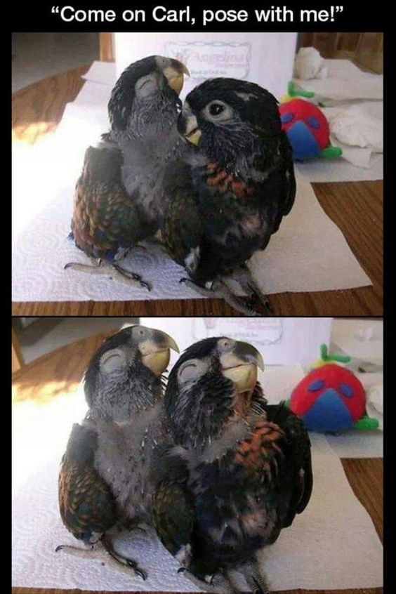 """Bird - """"Come on Carl, pose with me!"""""""