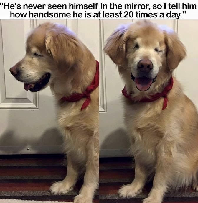"""Dog - """"He's never seen himself in the mirror, so I tell him how handsome he is at least 20 times a day."""""""