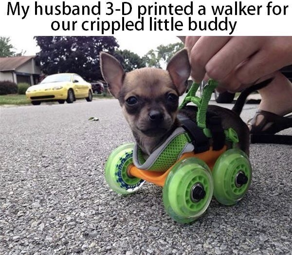 Dog - My husband 3-D printed a walker for our crippled little buddy