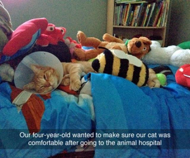 Stuffed toy - Our four-year-old wanted to make sure our cat was comfortable after going to the animal hospital