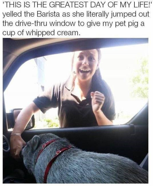 Seat belt - THIS IS THE GREATEST DAY OF MY LIFE! yelled the Barista as she literally jumped out the drive-thru window to give my pet pig a cup of whipped cream.