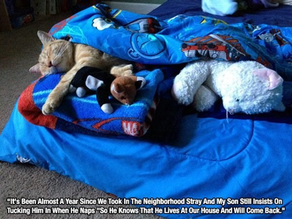 """Companion dog - CIt's Been Almost AYear Since We Took In The Neighborhood Stray And My Son Still Insists On Tucking Him In When He Naps """"So He Knows That He Lives At Our House And Will Come Back."""""""