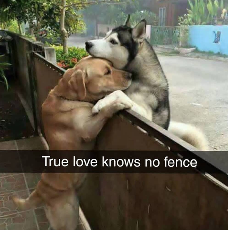 so cute dogs best friends awww true love - 9225402880