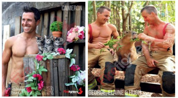firefighters calendar 2020 australia cute animals animals - 9225477