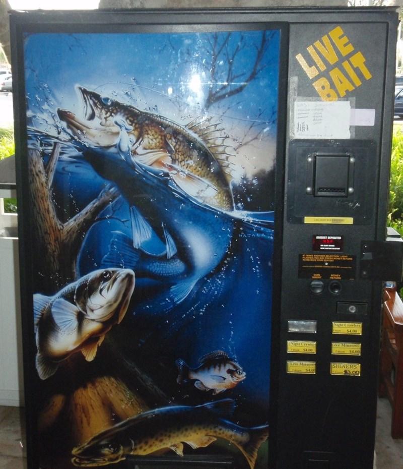 Fish - LIVE RAIT AMUNT DEPOSITED RETURN RETURN Night Crawlers S4.00 INight Crawlert ive Minnows drom $4,00 o $4.00 Live Minnows SHINERS B.00 $4.0