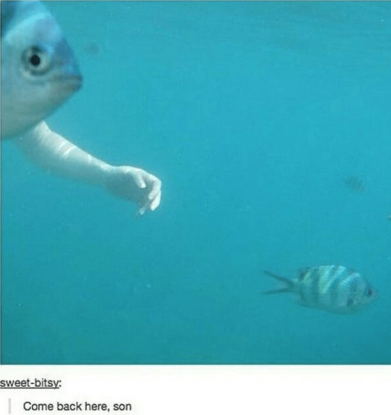 humpday meme of a giant fish with human hands chasing its son