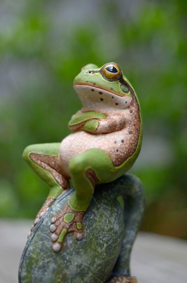 judgmental frog - 9225744640