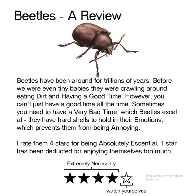 Insect - Beetles - A Review Beetles have been around for trillions of years. Before we were even tiny babies they were crawling around eating Dirt and Having a Good Time. However, you can't just have a good time all the time. Sometimes you need to have a Very Bad Time, which Beetles excel at - they have hard shells to hold in their Emotions, which prevents them from being Annoying Irate them 4 stars for being Absolutely Essential. 1 star has been deducted for enjoying themselves too much Extreme