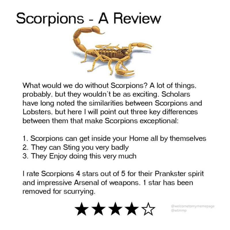 Text - Scorpions A Review - What would we do without Scorpions? A lot of things. probably, but they wouldn't be as exciting. Scholars have long noted the similarities between Scorpions and Lobsters, but here I will point out three key differences between them that make Scorpions exceptional: 1. Scorpions can get inside your Home all by themselves 2. They can Sting you very badly 3. They Enjoy doing this very much I rate Scorpions 4 stars out of 5 for their Prankster spirit and impressive Arsenal