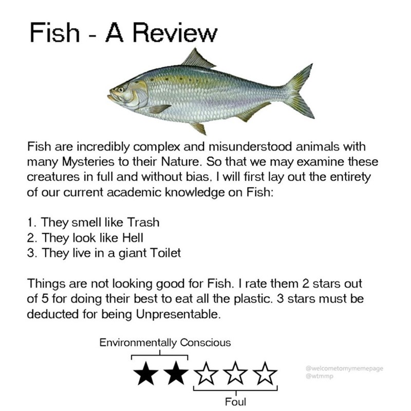 Fish - Fish - A Review Fish are incredibly complex and misunderstood animals with many Mysteries to their Nature. So that we may examine these creatures in full and without bias, I will first lay out the entirety of our current academic knowledge on Fish: 1. They smell like Trash 2. They look like Hell 3. They live in a giant Toilet Things are not looking good for Fish. I rate them 2 stars out of 5 for doing their best to eat all the plastic. 3 stars must be deducted for being Unpresentable Envi