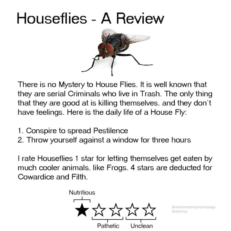 Insect - Houseflies - A Review Mystery to House Flies. It is well known that they are serial Criminals who live in Trash. The only thing that they are good at is killing themselves, and they don't have feelings. Here is the daily life of a House Fly: There is no 1. Conspire to spread Pestilence 2. Throw yourself against a window for three hours I rate Houseflies 1 star for letting themselves get eaten by much cooler animals, like Frogs. 4 stars are deducted for Cowardice and Filth. Nutritious @w