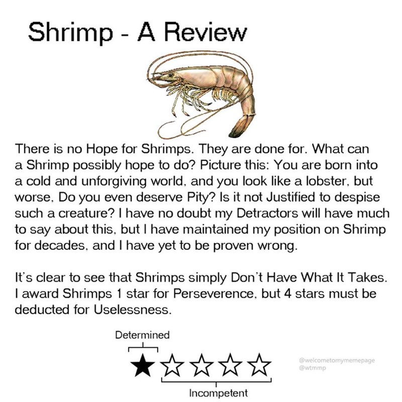 Text - Shrimp - A Review There is no Hope for Shrimps. They are done for. What can a Shrimp possibly hope to do? Picture this: You are born into a cold and unforgiving world, and you look like a lobster, but worse, Do you even deserve Pity? Is it not Justified to despise such a creature? I have no doubt my Detractors will have much to say about this, but I have maintained my position for decades, and I have yet to be proven wrong on Shrimp It's clear to see that Shrimps simply Don't Have What It