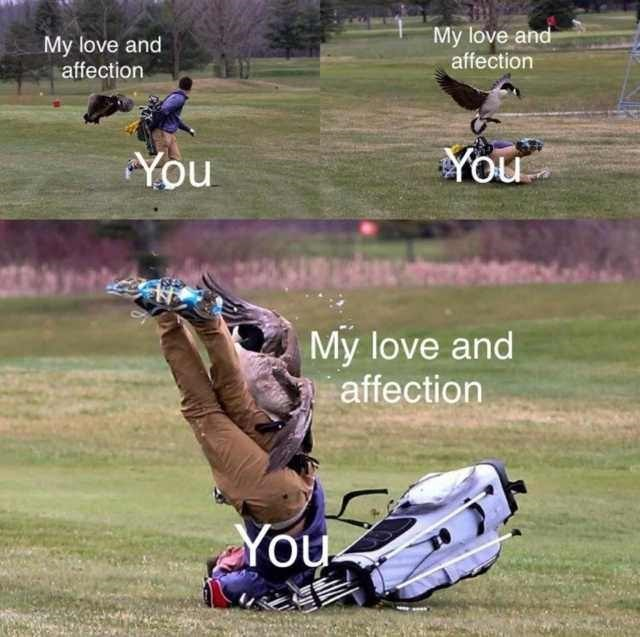 bird attacking golfer in funny meme about love and affection