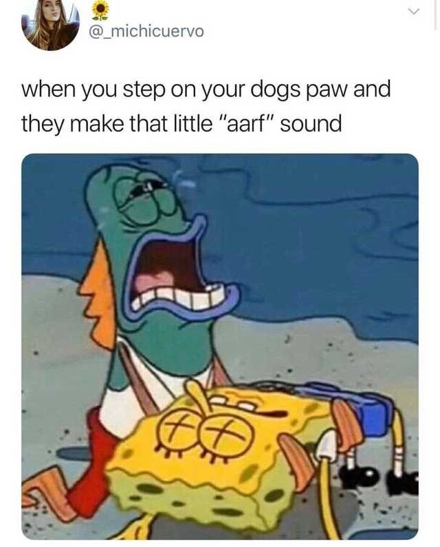 spongebob meme about when you step on your dogs paw