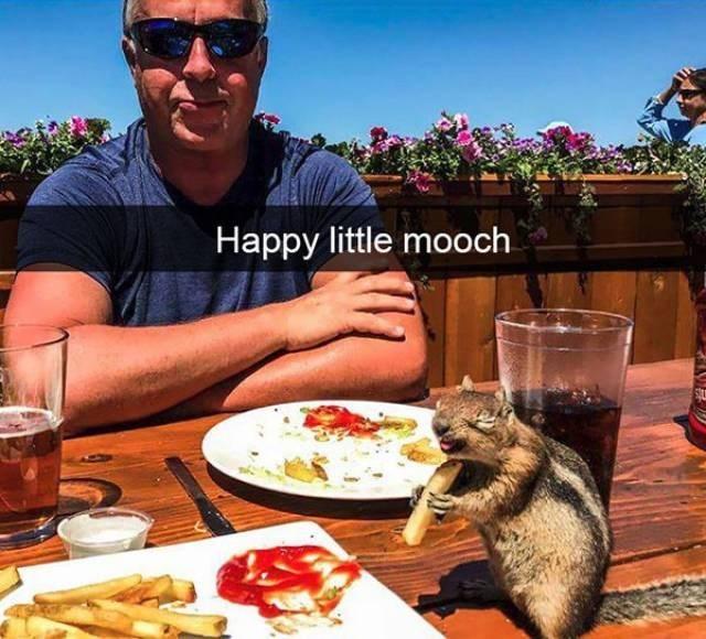 Meal - Happy little mooch