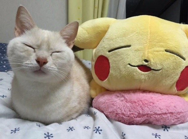 cat pikachu - 9226069504