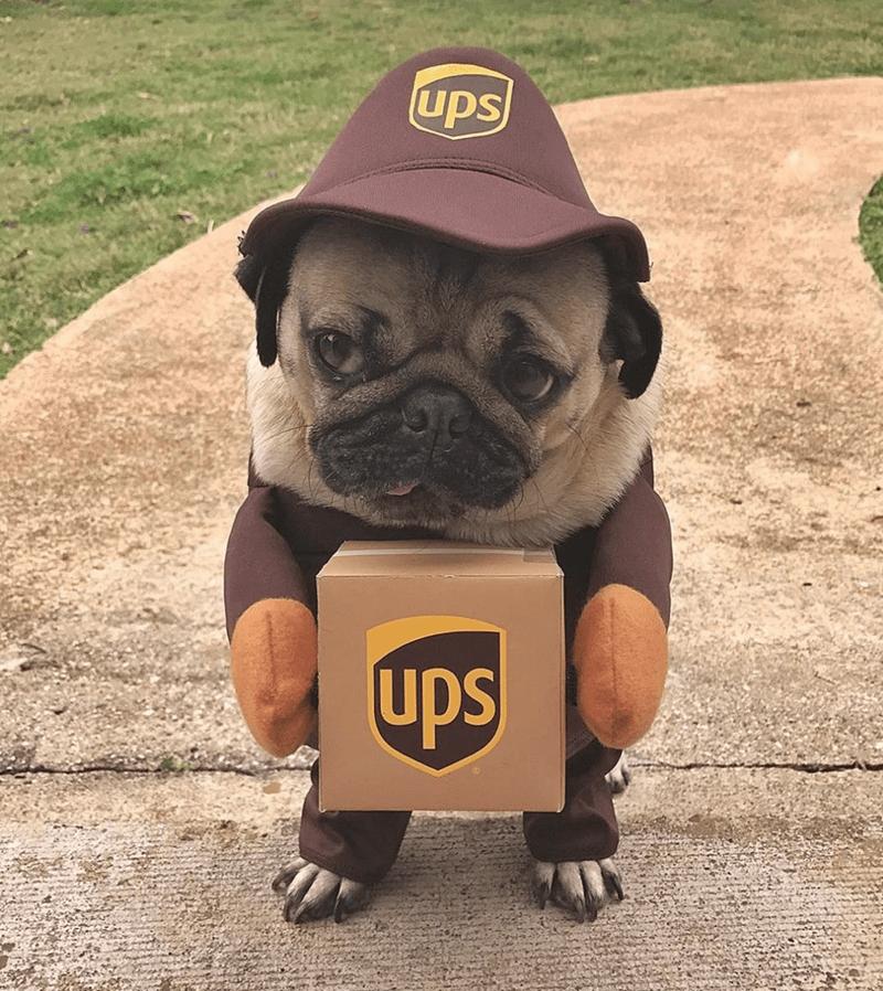 pug - Dog - UPs ups