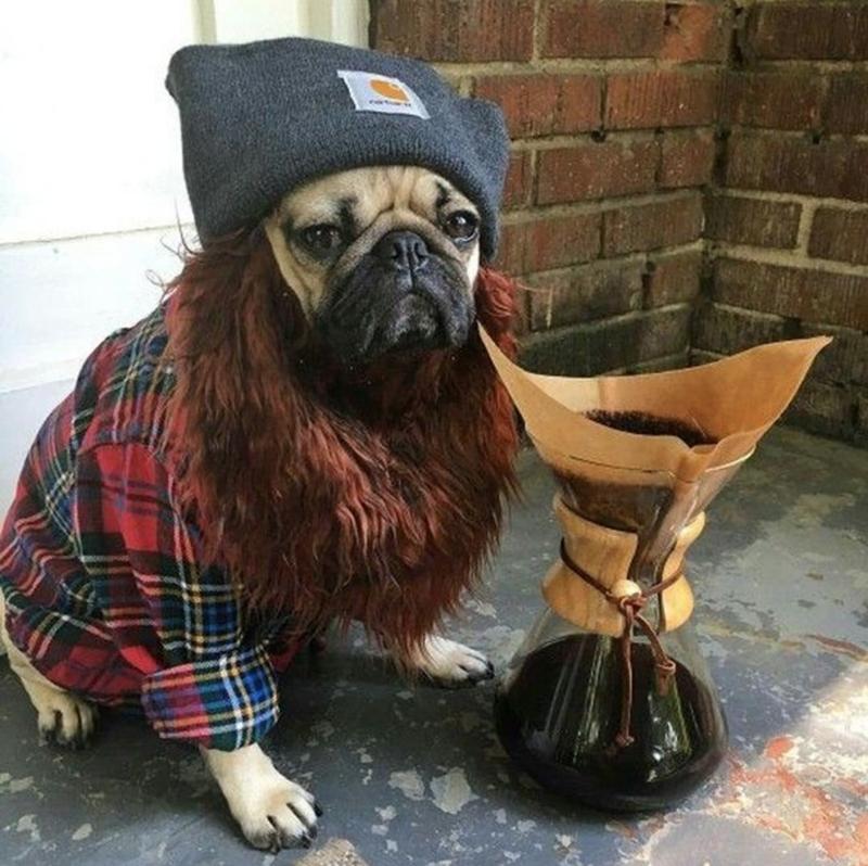 pug - Pug