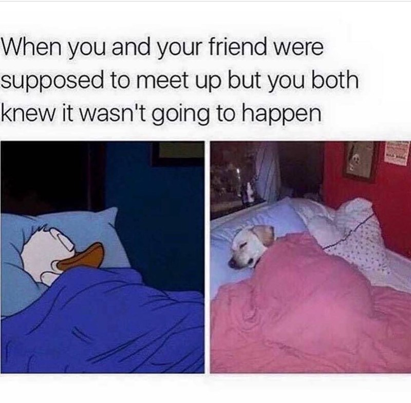 funny meme of napping instead of meeting up
