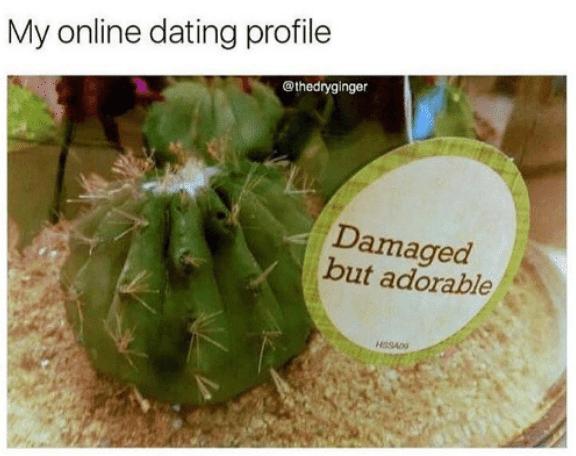 Cactus - My online dating profile @thedryginger Damaged but adorable HESAD