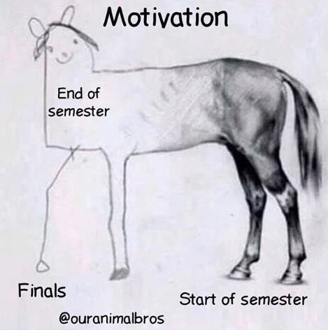 Vertebrate - Motivation End of semester Finals Start of semester @ouranimalbros