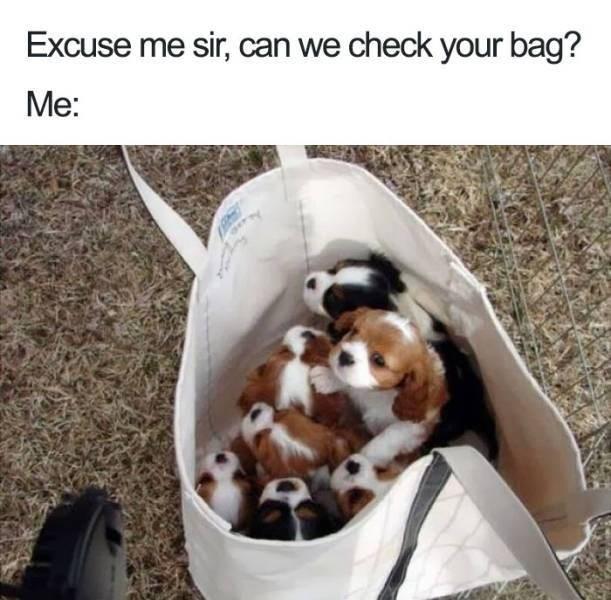 Dog - Excuse me sir, can we check your bag? Ме: