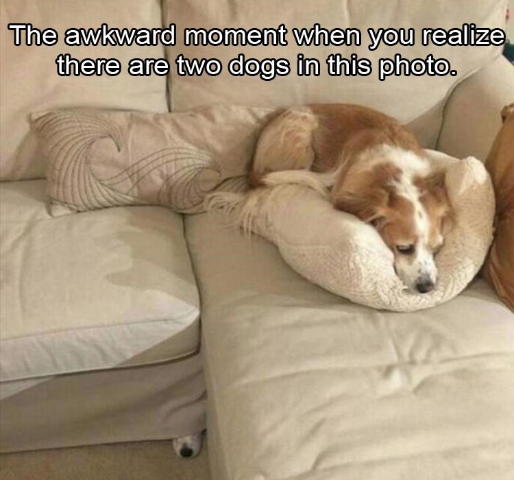 Canidae - The awkward moment when you realize there are two dogs in this photo.
