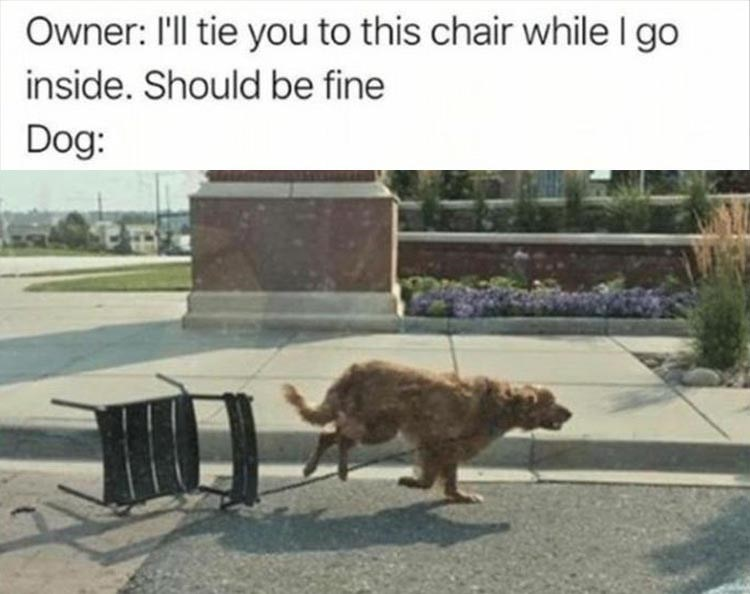 Dog - Owner: 'l tie you to this chair while I go inside. Should be fine Dog: