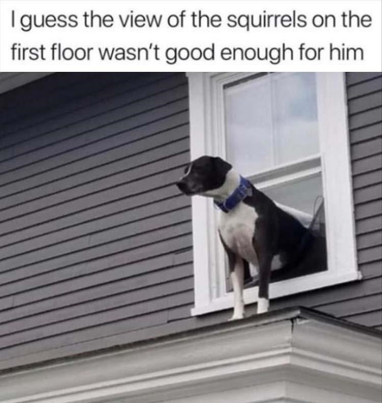 Window - Iguess the view of the squirrels on the first floor wasn't good enough for him