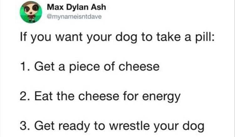Text - Max Dylan Ash @mynameisntdave If you want your dog to take a pil: 1. Get a piece of cheese 2. Eat the cheese for energy 3. Get ready to wrestle your dog