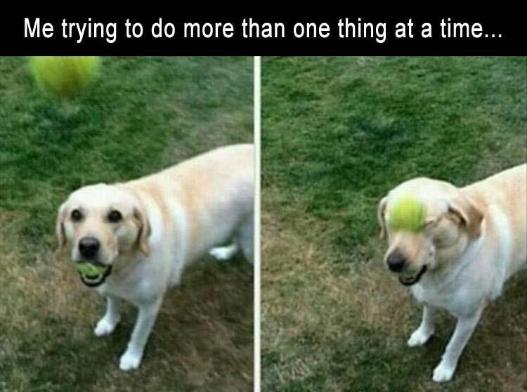 Dog - Me trying to do more than one thing at a time...