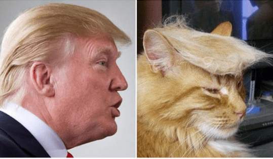 trump look alikes - Hair