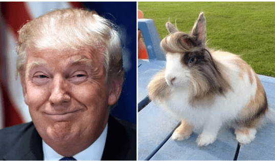 trump look alikes - Rabbit