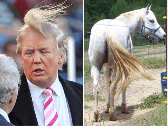 trump look alikes - Horse