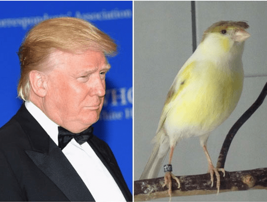 trump look alikes - Bird - H