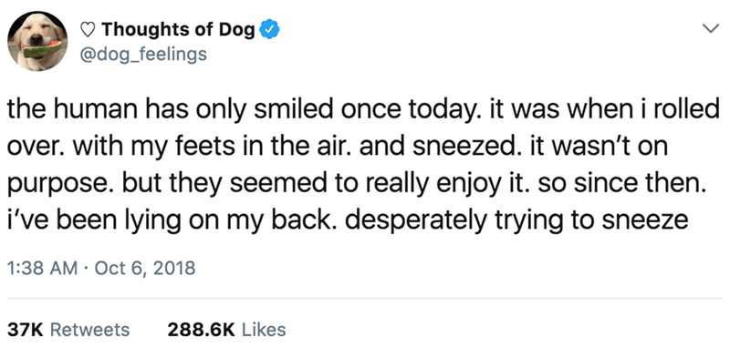Text - Thoughts of Dog @dog_feelings the human has only smiled once today. it was when i rolled over. with my feets in the air. and sneezed. it wasn't on purpose. but they seemed to really enjoy it. so since then. i've been lying on my back. desperately trying to sneeze 1:38 AM Oct 6, 2018 288.6K Likes 37K Retweets