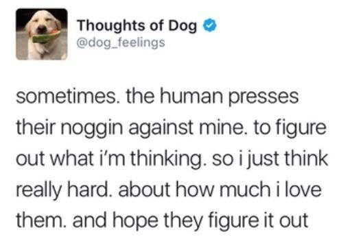 Text - Thoughts of Dog @dog feelings sometimes. the human presses their noggin against mine. to figure out what i'm thinking. so i just think really hard. about how much i love them. and hope they figure it out