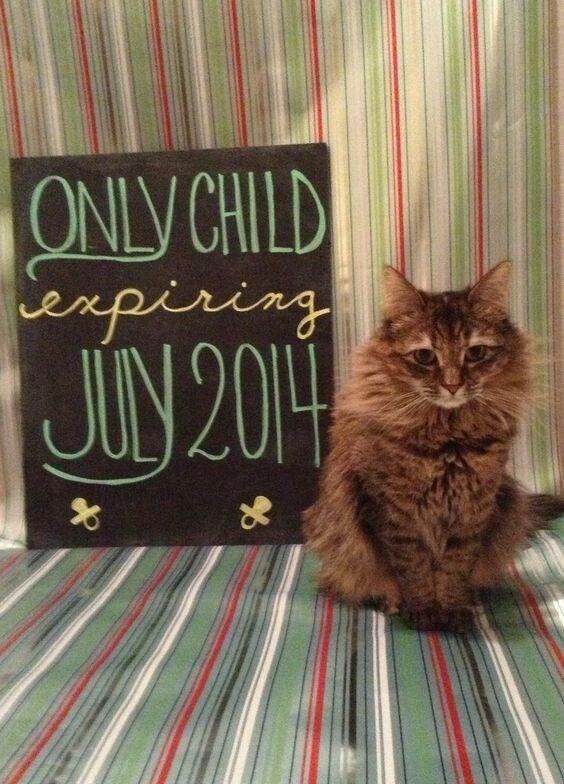 Cat - ONLY CHILD enpiring JIN 201H