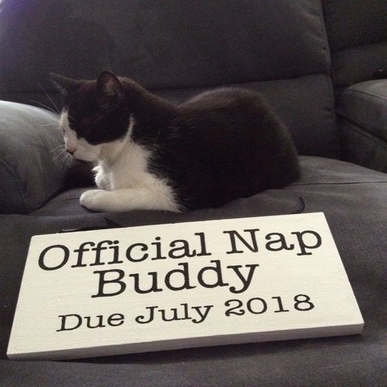 Cat - Official Nap Buddy Due July 2018
