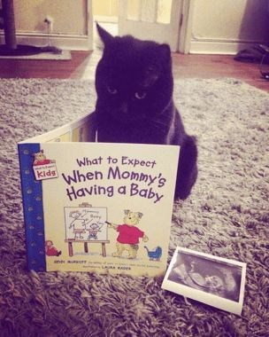 Cat - What to Expect When Mommy's Having a Baby kids ane aursur