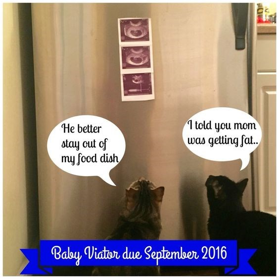 Text - 1 told you mom He better was getting fat. stay out of my food dish Baby Viator due September 2016