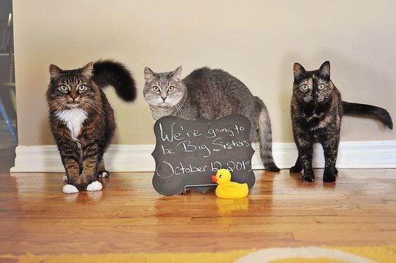 Cat - We're gnsto Big Sstars October o be