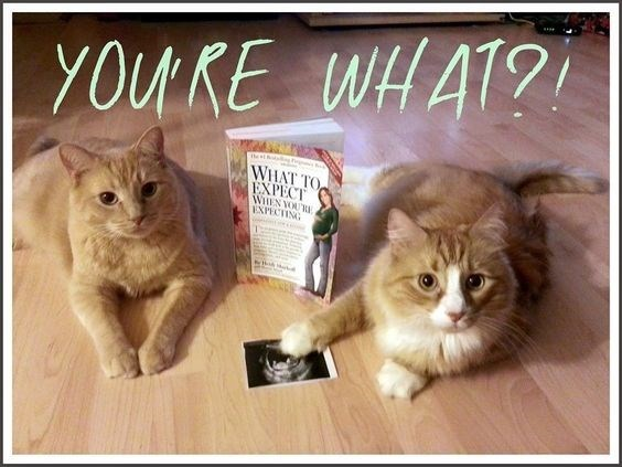 Cat - YOUKE WHAT? WHAT TO EXPECT WHEN VOU EXPECTING Tha